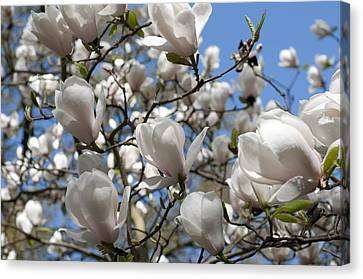 Canvas Print featuring the photograph Magnolia by Lana Enderle