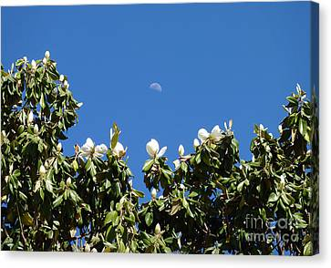 Canvas Print featuring the photograph Magnolia Moon by Meghan at FireBonnet Art