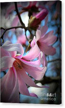 Magnolia Morning Canvas Print by Geri Glavis