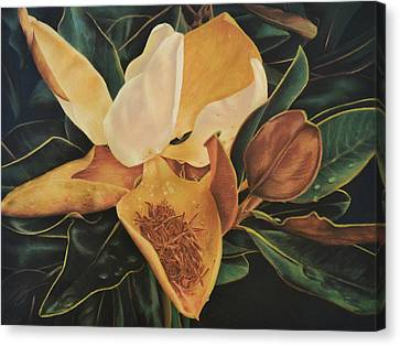 Canvas Print featuring the pastel Magnolia - Pastel by Ben Kotyuk