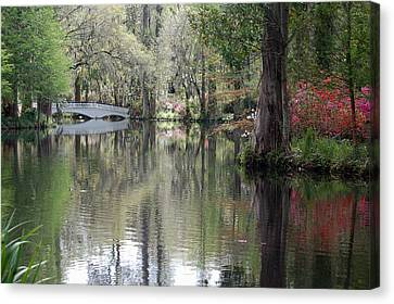 Magnolia Plantation Gardens Series II Canvas Print by Suzanne Gaff