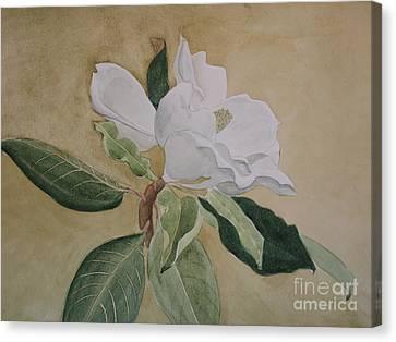 Seem Canvas Print - Magnolia San Marino by Nancy Kane Chapman