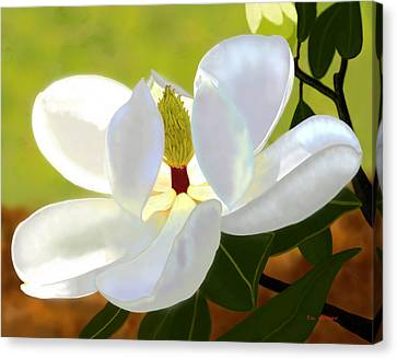Magnolia Canvas Print by Tim Stringer