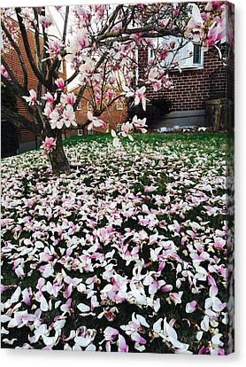 Magnolia Canvas Print by Toni Martsoukos