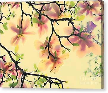 Magnoliart In Apricot And Light Green Canvas Print by Die Farbenfluesterin