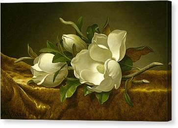 Magnolias On Gold Velvet Cloth Canvas Print by Martin Johnson Heade