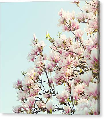 Magnolias Canvas Print by Sylvia Cook