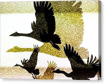 Magpie Geese In Flight Canvas Print by Holly Kempe
