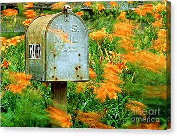 Mailbox Surrounded By Tiger Lilies Canvas Print by James L. Amos