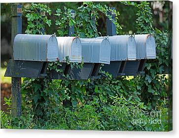 Mailboxes And Ivy Canvas Print by Louise Heusinkveld