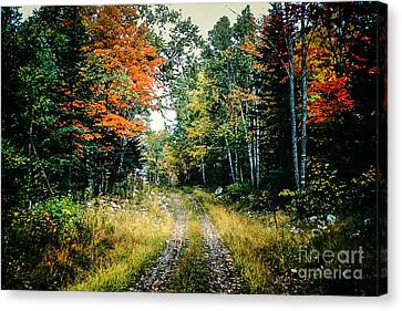 Maine Back Road Canvas Print by George DeLisle