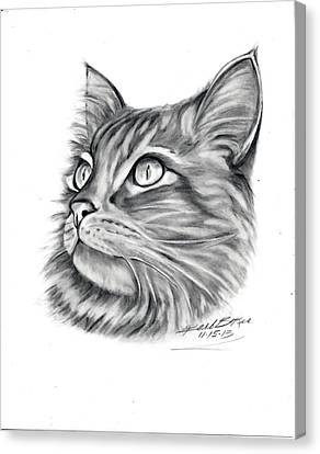 Maine Coon Canvas Print by Barb Baker