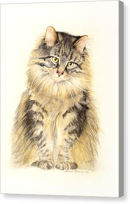 Maine Coon Cat Canvas Print by Bonnie Rinier