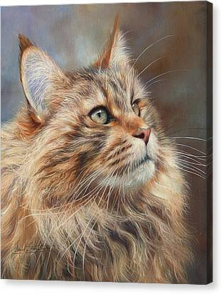 Maine Coon Cat Canvas Print by David Stribbling