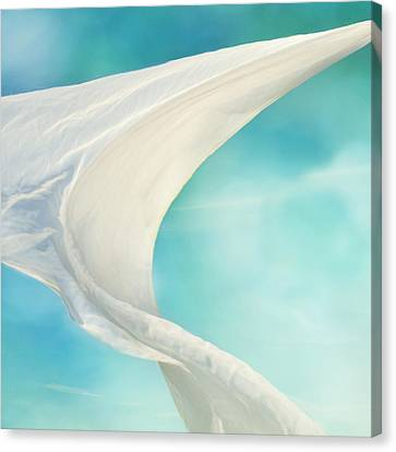 Mainsail 3 Canvas Print by Laura Fasulo