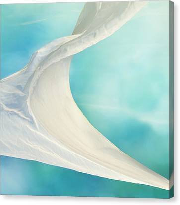 Mainsail  Canvas Print by Laura Fasulo