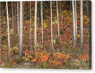 Majestic Autumn In The Grand Tetons Canvas Print by Sandra Bronstein