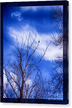 Majestic Bald Eagle In A Dramatic Sky Canvas Print by Omaste Witkowski