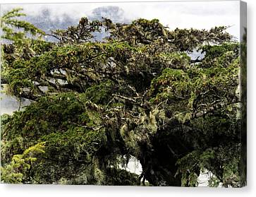 Canvas Print featuring the photograph Majestic Branches by Davina Washington