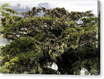 Majestic Branches Canvas Print by Davina Washington