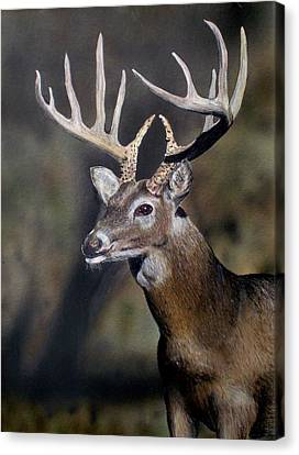 Majestic Buck Canvas Print by Todd Spaur
