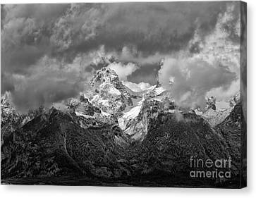 Majestic Canvas Print by Charlene  Aycock