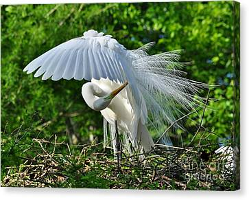 Canvas Print featuring the photograph Majestic Egret by Kathy Baccari