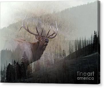 Majestic Elk Canvas Print by Clare VanderVeen