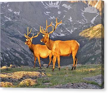 Canvas Print featuring the photograph Majestic Elk by Diane Alexander