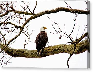 Canvas Print featuring the photograph Majestic I by Trina  Ansel