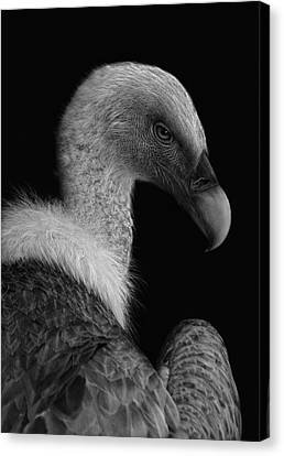 Thriller Canvas Print - Majestic by Jimmy Hoffman