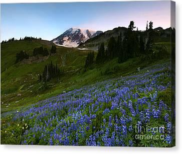 Majestic Meadow Canvas Print by Mike Dawson