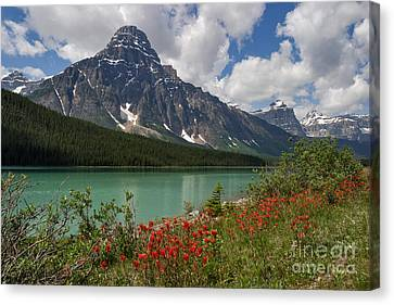 Majestic Mount Chephren Canvas Print