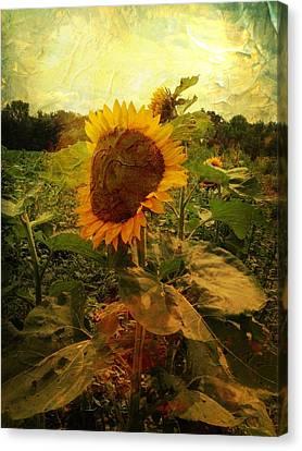 Majestic Sunflower  Canvas Print