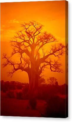 Majestic Sunset Tree Canvas Print