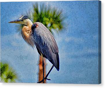Canvas Print featuring the photograph Majestic Tri-colored Heron by Pamela Blizzard