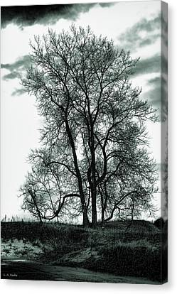Canvas Print featuring the photograph Majesty by Lauren Radke