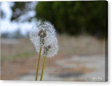 Canvas Print featuring the photograph Make A Wish by Alex King
