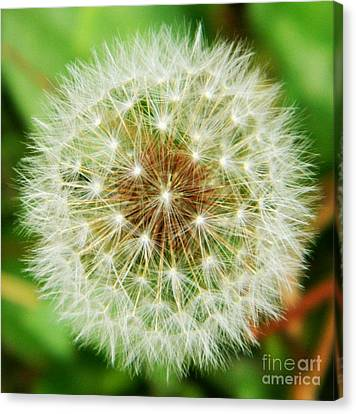 Make A Wish Canvas Print by Andrea Anderegg