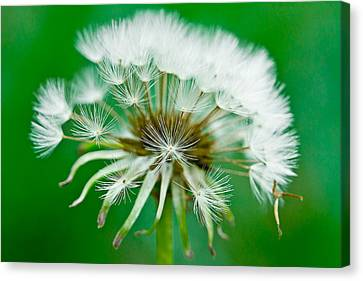 Canvas Print featuring the photograph Make A Wish by Annette Hugen