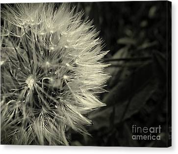 Canvas Print featuring the photograph Make A Wish by Clare Bevan