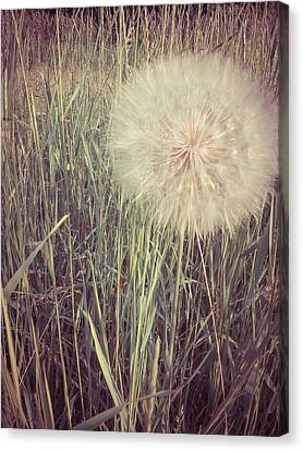Make A Wish Canvas Print by Dawdy Imagery