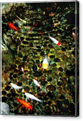 Make A Wish Koi Fishes Canvas Print by Danielle  Parent