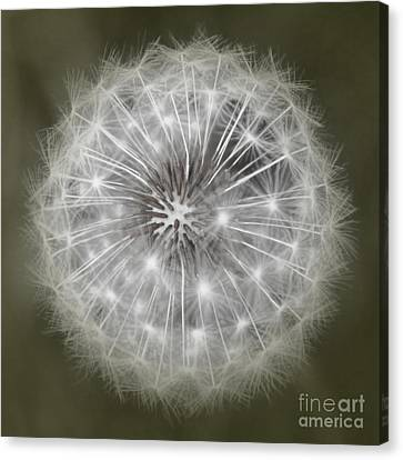 Make A Wish Canvas Print by Peggy Hughes