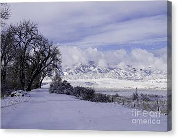 Canvas Print featuring the photograph Making First Tracks by Kristal Kraft