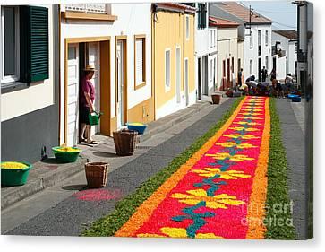 Making Flower Carpets Canvas Print by Gaspar Avila