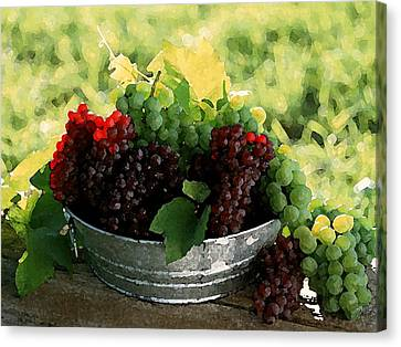 Making Wine Canvas Print by Cole Black