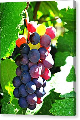 Malbec Canvas Print by Emily Fidler