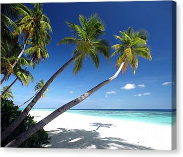 Maldives 05 Canvas Print by Giorgio Darrigo
