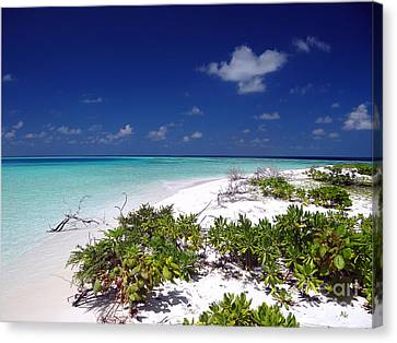 Maldives 07 Canvas Print by Giorgio Darrigo